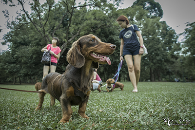 Animal event | Singapore Dachies Club Gathering
