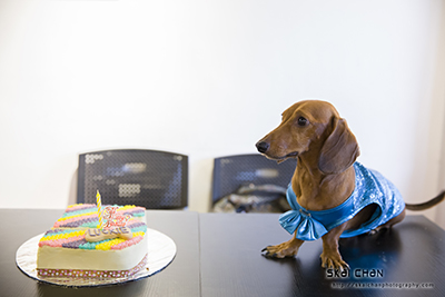 Barkday | Luckie's Dog Day Celebration